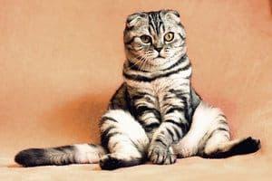 image of a tabby feline