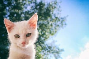 white cat isolated on sky background