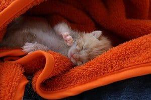 very little kitten lies in an orange blanket