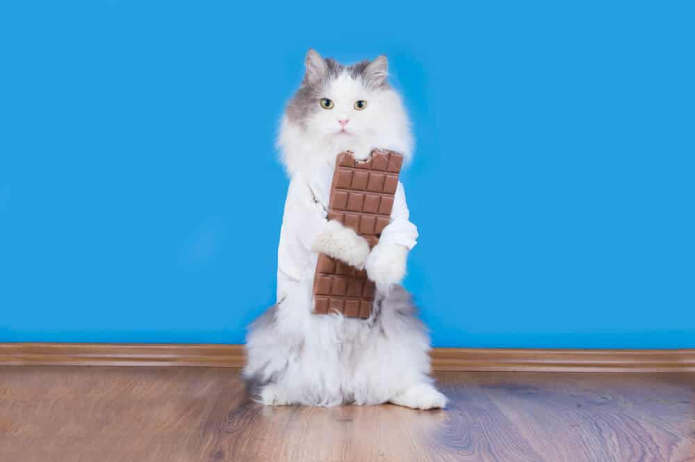 image of a kitty and a chocolate bar