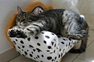 image of a cat sleeping on her bed