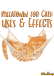 Melatonin for Cats Uses And Potential Side Effects