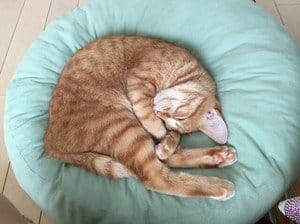 image of a feline sleeping