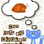 Can Cats Eat Chicken Bones? Yes, But....