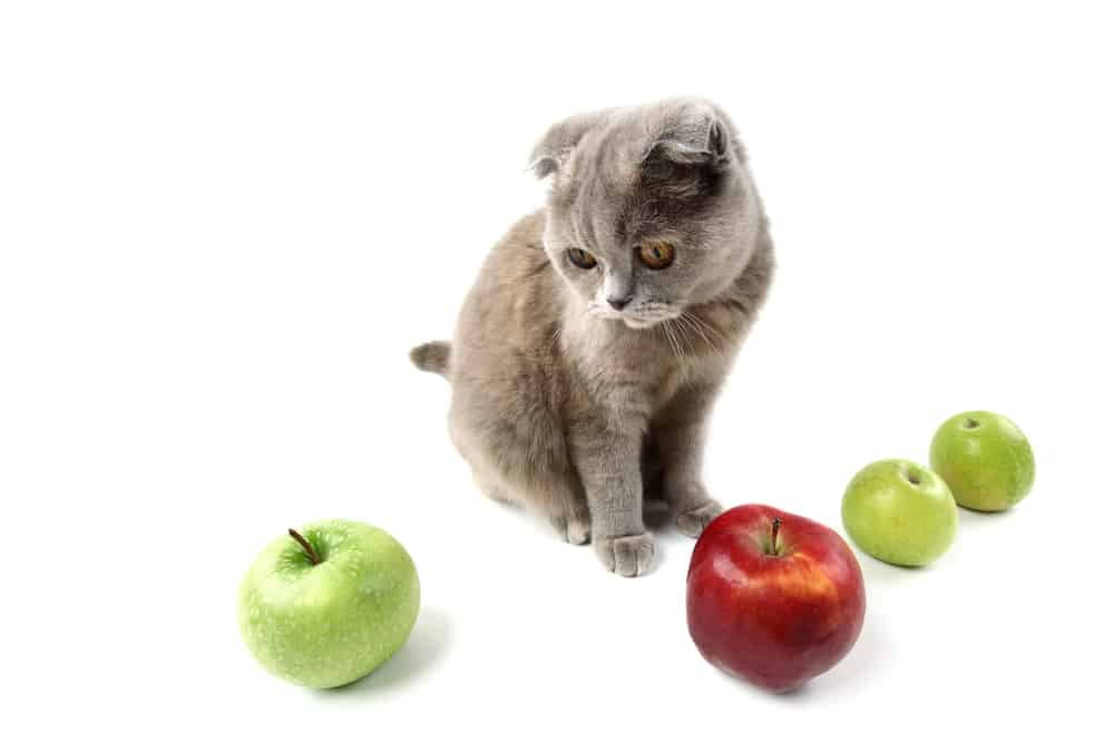 Can Cats Eat Apples Is It The Best Treat