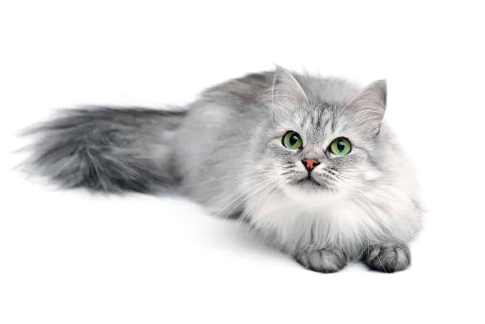 gray cat names
