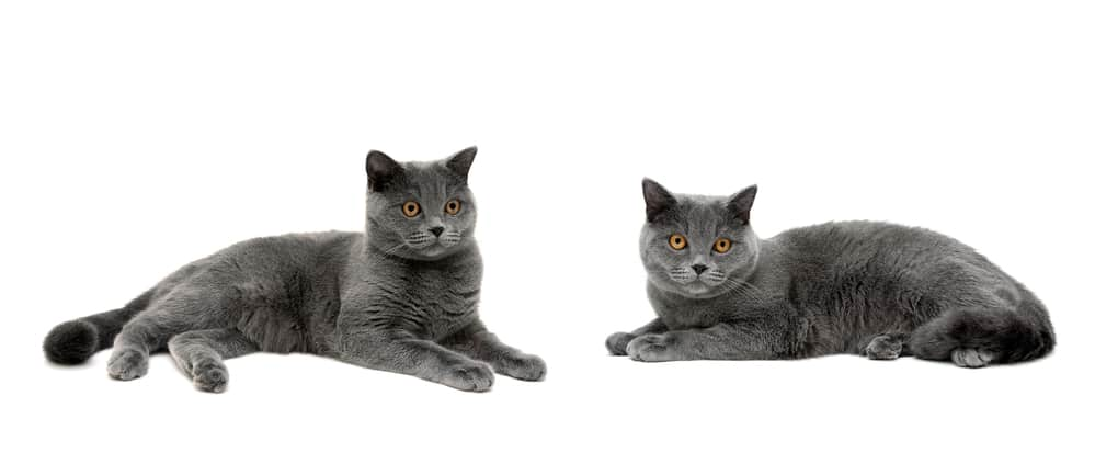 Gray Cat Names 83 Amazing Names For Your Ash Baby