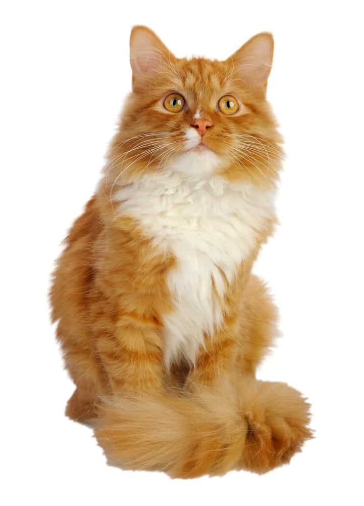 248 Orange Cat Names For All Ginger Felines 2