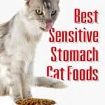 Sensitive Stomach Cat Food: 5 Best Brands for 2021 Revealed!
