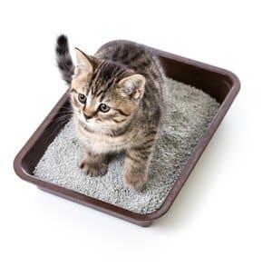 image of a kitten in a litter