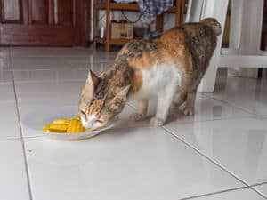 image of a feline eating corn from a plate