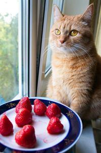 image of a kitty with strawberries