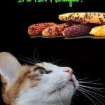 Can Cats Eat Corn? Is It Harmful For Your Kitty?