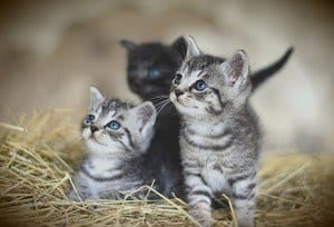 image of three small kittens