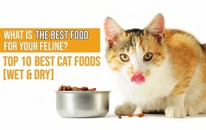 Dry cat food best choices