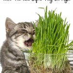 Can Cats Eat Catnip? Is it Safe For Them?