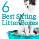 2021 Buyer's Guide & Reviews for the Top 6 Best Sifting Litter Box