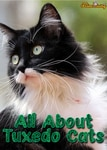 Everything About The Tuxedo Cat - Facts, Genetics and Personality