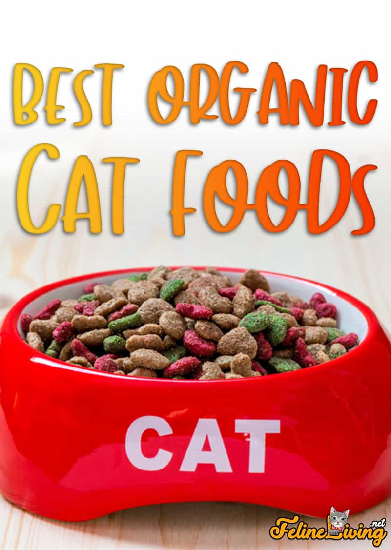 Best Organic Cat Foods