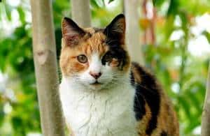 image of a beautiful calico cat