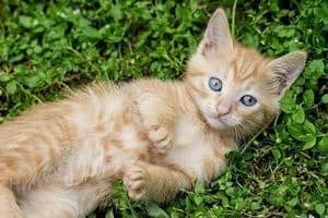 Tabby kitten lying on the grass