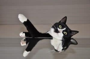 picture of funny black and white cat