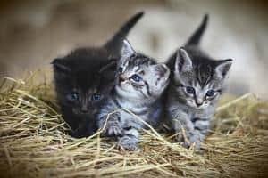 How Do Cats Mate? When Is Their Breeding Season? 5