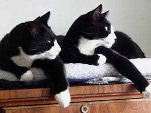 two black and white cats looking away