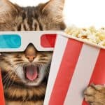 Can Cats Eat Popcorn? Is It Safe For Them Or Not?