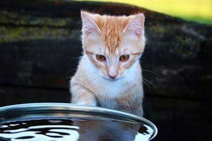 image of a kitty looking at water