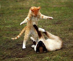 How Do Cats Mate? When Is Their Breeding Season? 1