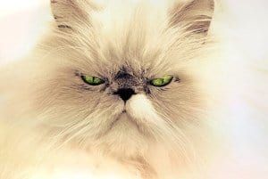 This is Why Your Cat Breathes Heavily! It Could Be Dangerous! 3