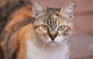 image of an aging feline