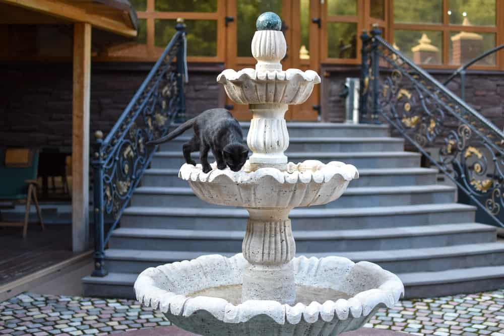 Best Cat Water Fountain: 6 Top Brands Revealed! 16