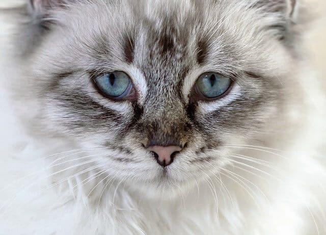 image of a sad kitty