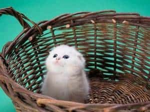 image of a white small kitten