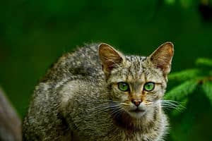 image of a feline with green eyes