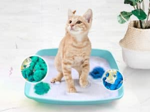 The Amazing Color Changing Litter - Pretty Litter Review [Updated for 2020] 3