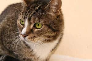 image of a kitty with green eyes