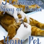 5 Reasons to Spay or Neuter Your Pet