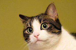 image of a scared feline