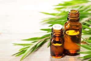 image of fresh tea tree leaves and essential oil