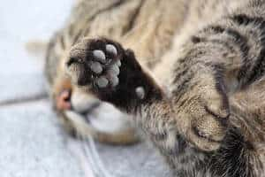 image of a cats paws kneading