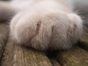 image of scent hormones in the paws