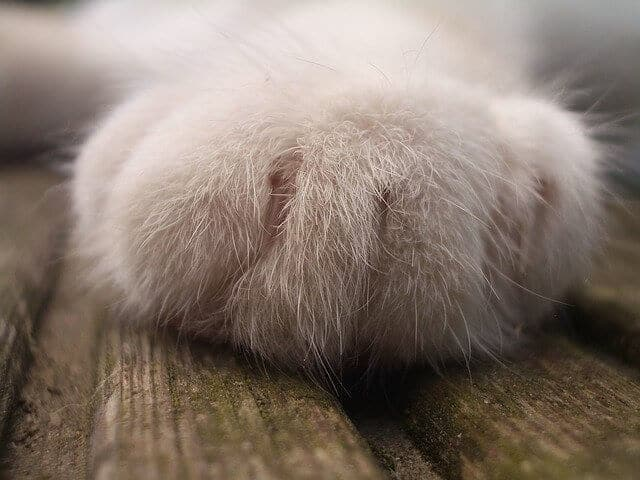 Why Do Cats Knead Their Owners? What Does It Mean? 1