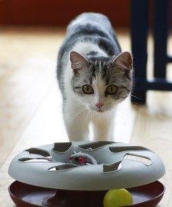 image of a cat playing with an interactive cat toy