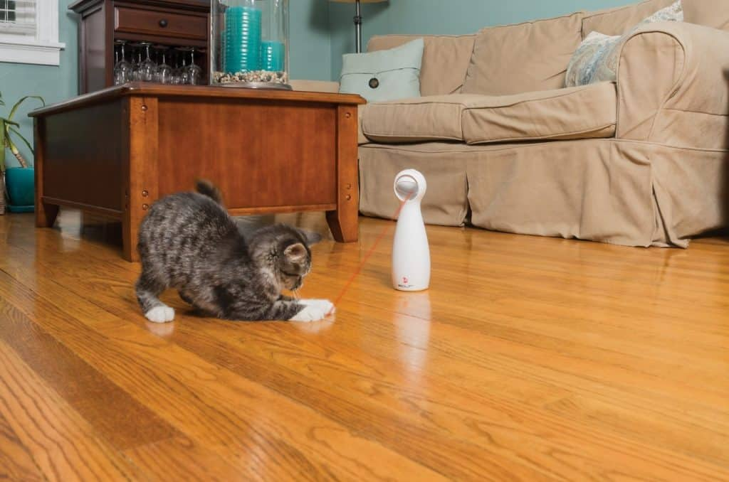 Best Interactive Cat Toys - Automatic Toys For Your Feline! 20