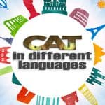 Cat In Different Languages From All Around The World