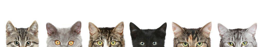 Photo of Cat's half heads on a white background