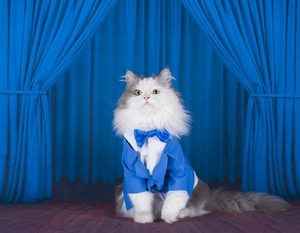 photo of cat in a dark blue jacket and tie on stage
